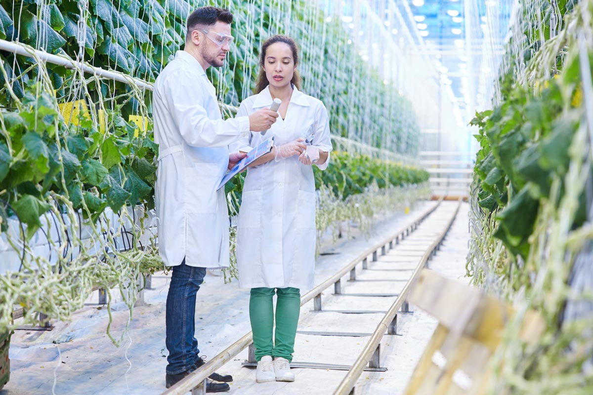 Agri tech scientist in a modern industrial green house.